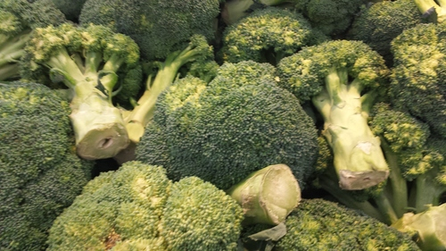broccoli farm