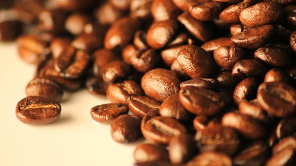 Starting a Coffee Bean Farm