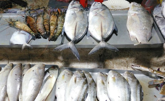 Starting A Fish Shop How To Start Selling Business