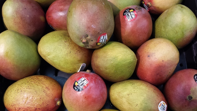 mangoes from orchard