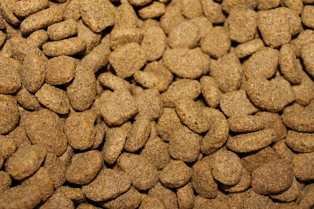 starting a dog food business